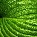 leaf-749929_19202